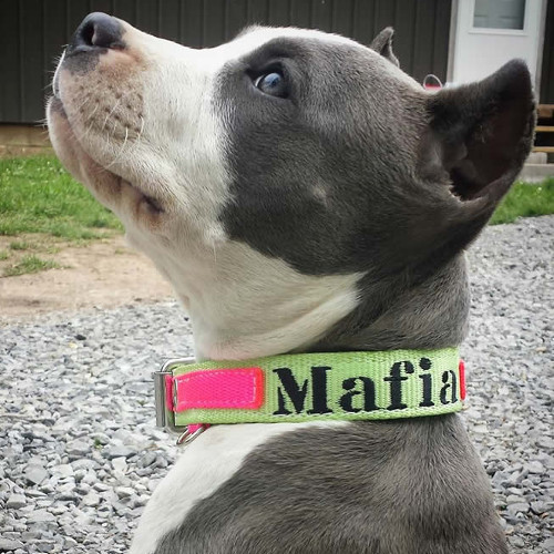 Custom Dog Collars | Blocky Dogs