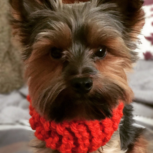 Dog Scarves | {Craft'd} Handmade